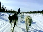 Stan Sr. on his dogsled