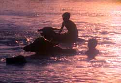 The Betrayal - Children playing on water buffalo in Laos