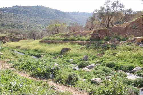 Area where Shehadeh walks
