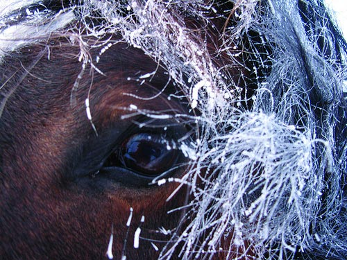 The Edge of Dreaming: Close-up of a horse